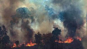 ¿Qui mata els ecologistes?