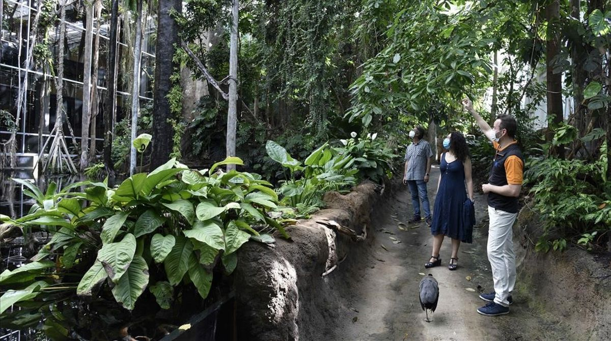 Recreación de un bosque inundado del Amazonas en CosmoCaixa.