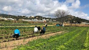 El programa de formació agroecològica per a joves 'Arrelem' de Mataró inicia la seva segona edició