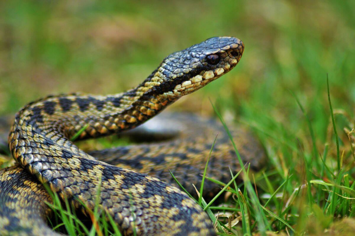 Hoy es el Día Mundial de las Serpiente: ¿Qué hacer si nos encontramos con una?