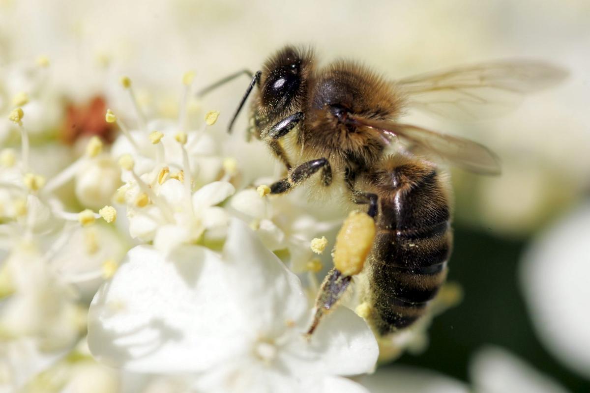 Pollinator Park, l'eina digital que mostra com serà el futur sense insectes pol·linitzadors