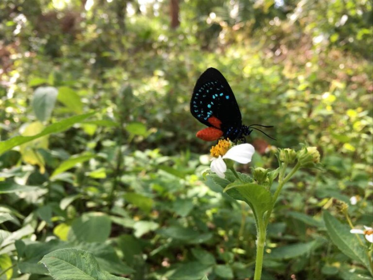"""""""Nos estamos cargando la fauna y la flora del planeta azul"""""""