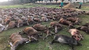 Imágenes de los más de 500 animalesabatidos difundidas en las redes sociales por algunos de los 16 cazadores españoles que participaron en la montería de Portugal.