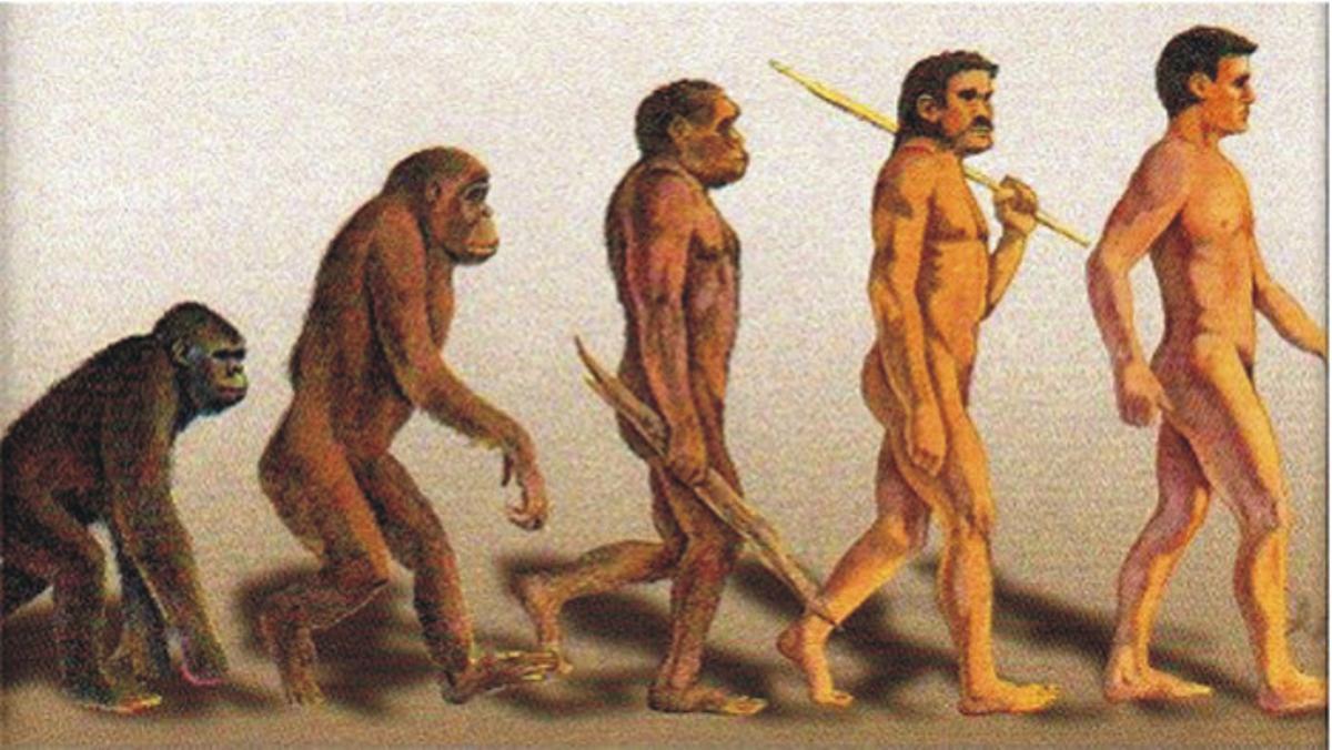 Evolución delaustralopitecus, homo erectus, homo sapiensal hombre.