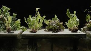 Plantas cultivadas sin tierra de la mano de Aquapioneers.
