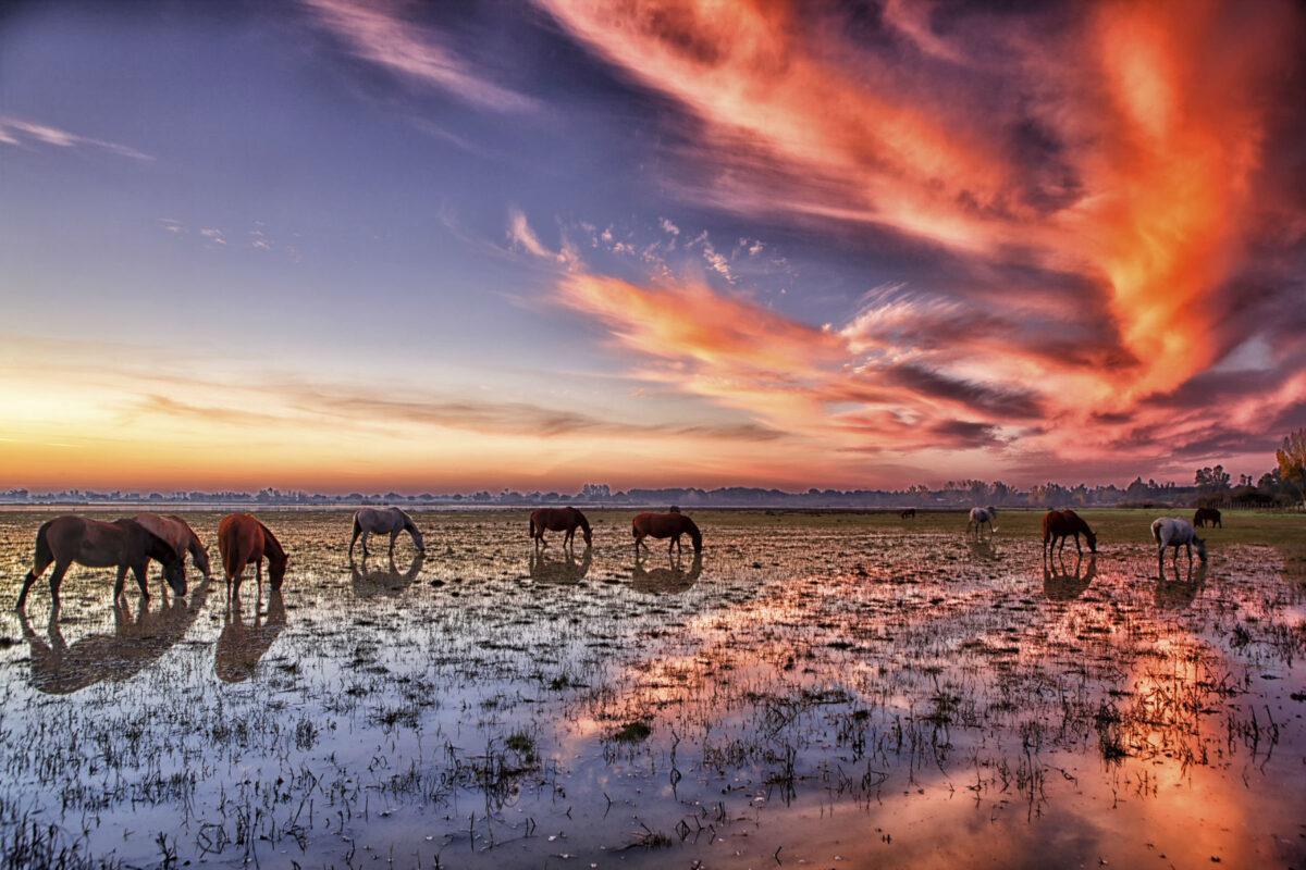 Doñana, en peligro: la Unesco exige un cambio radical en la gestión del humedal