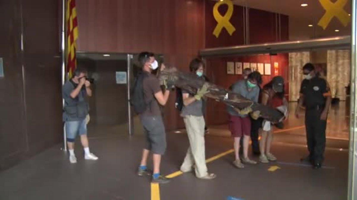 Un grupo de activistas intenta entrar en la Conselleria de Territori con un tronco para protestar por la ampliación de la C-32.