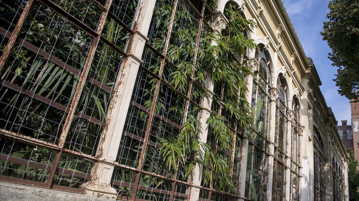 Las plantas asoman por las ventanas del Hivernacle, que vive un deterioro considerable.