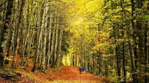 Hayedos y robledales: En busca del bosque encantado