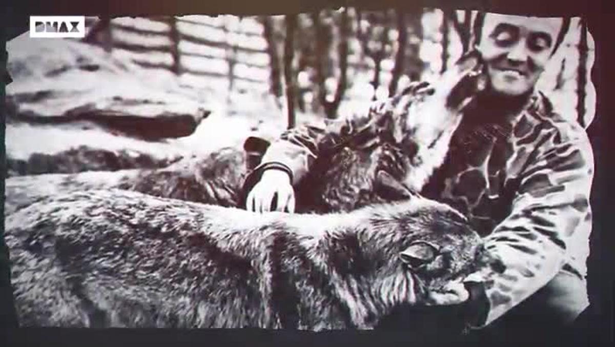 Frank Cuesta aborda el debate sobre el lobo ibérico en un nuevo especial de DMAX