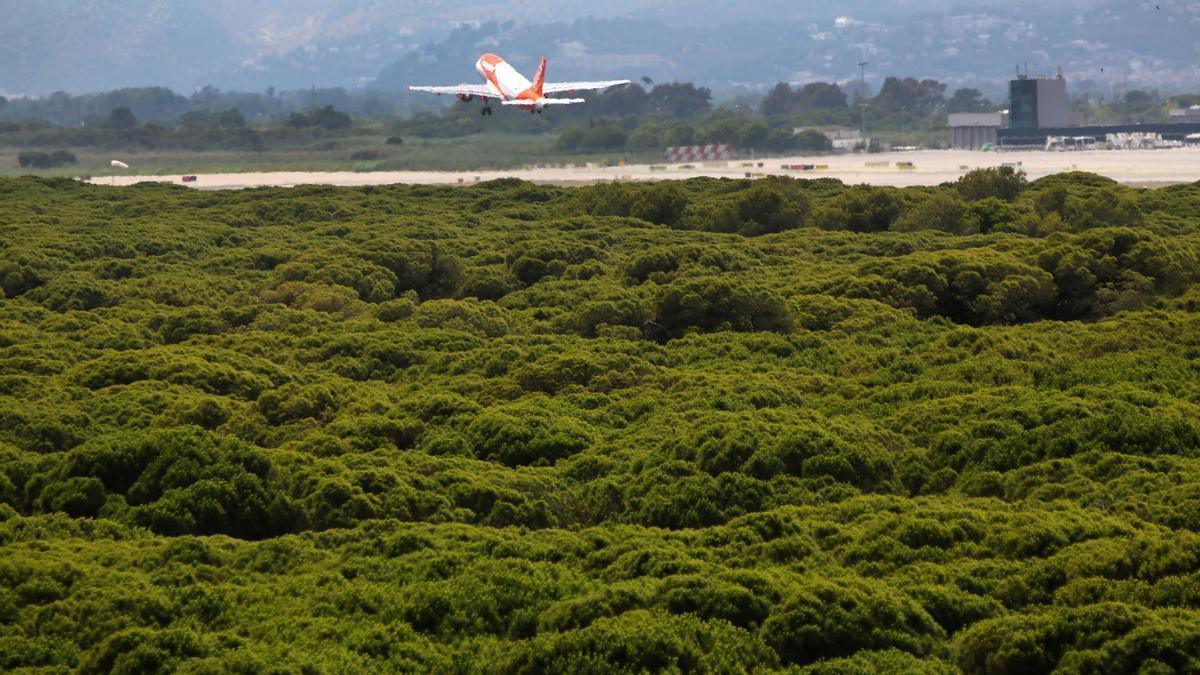 El Gobierno y la Generalitat acuerdan ampliar El Prat y un calendario de reuniones. En la foto, un avión despega junto a la pineda de Can Camins.