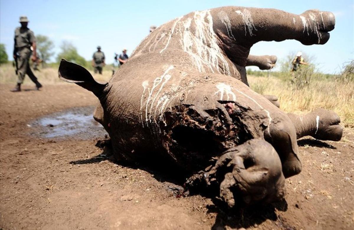 Un rinoceronte hallado muerto y mutilado en el parque nacional Kruger, en Sudáfrica.
