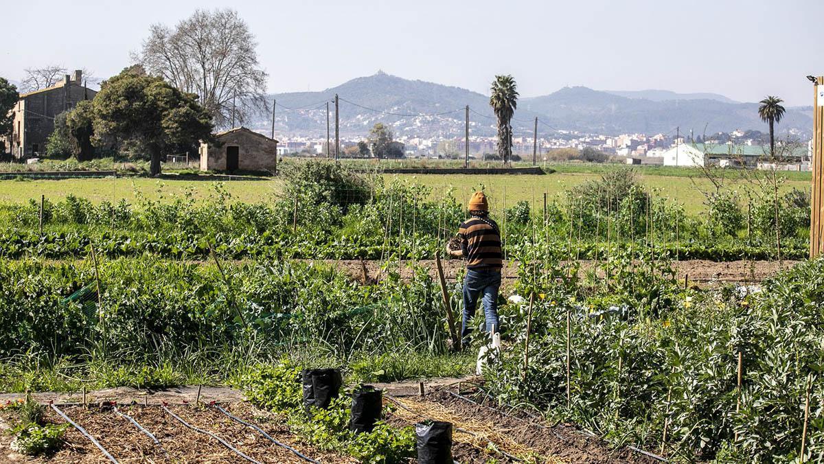 Barcelona contará con una estrategia alimentaria acorde con los Objetivos de Desarrollo Sostenible (ODS)