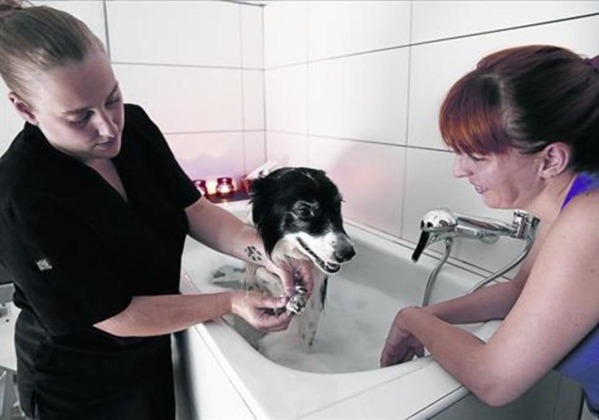 Baño relajante 8 Diana (izquerda) masajea un perro en el 'spa' en presencia de Diana, la propietaria.