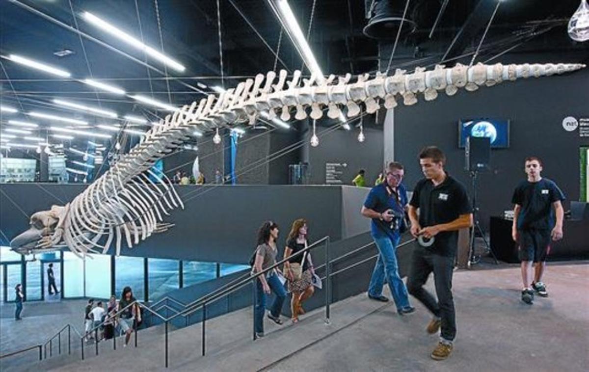 El esqueleto de la ballena desciende sinuoso por la escalinata del Museu Blau del Fòrum, ayer.
