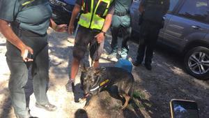 La perra Xena de la Guardia Civil que ha encontrado el cuerpo de Blanca Fernández Ochoa.