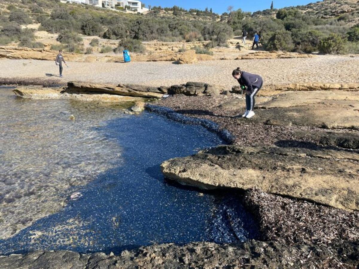 Invasión de pequeñas medusas (inofensivas) en las playas del Mediterráneo