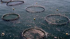 L'aqüicultura guanya terreny als productes del mar