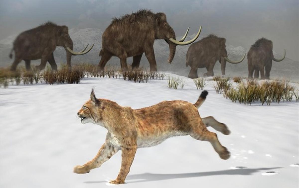 Reconstrucción del lince ibérico que habitó la península ibérica hace 1,6 millones de años.