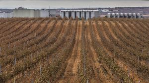 Campos de viñas y bodegas al fondo en el municipio de Requena.