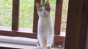Una gata observa el interior de una vivienda en la localidad gerundense de Nevà.