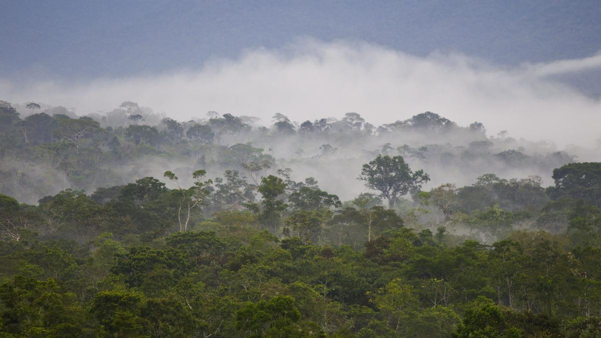 Algunas zonas del Amazonas emiten más carbono del que absorben