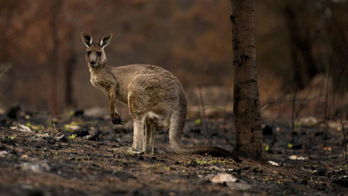 El incendio forestal del suroeste australiano se agrava y arrasa 71 viviendas