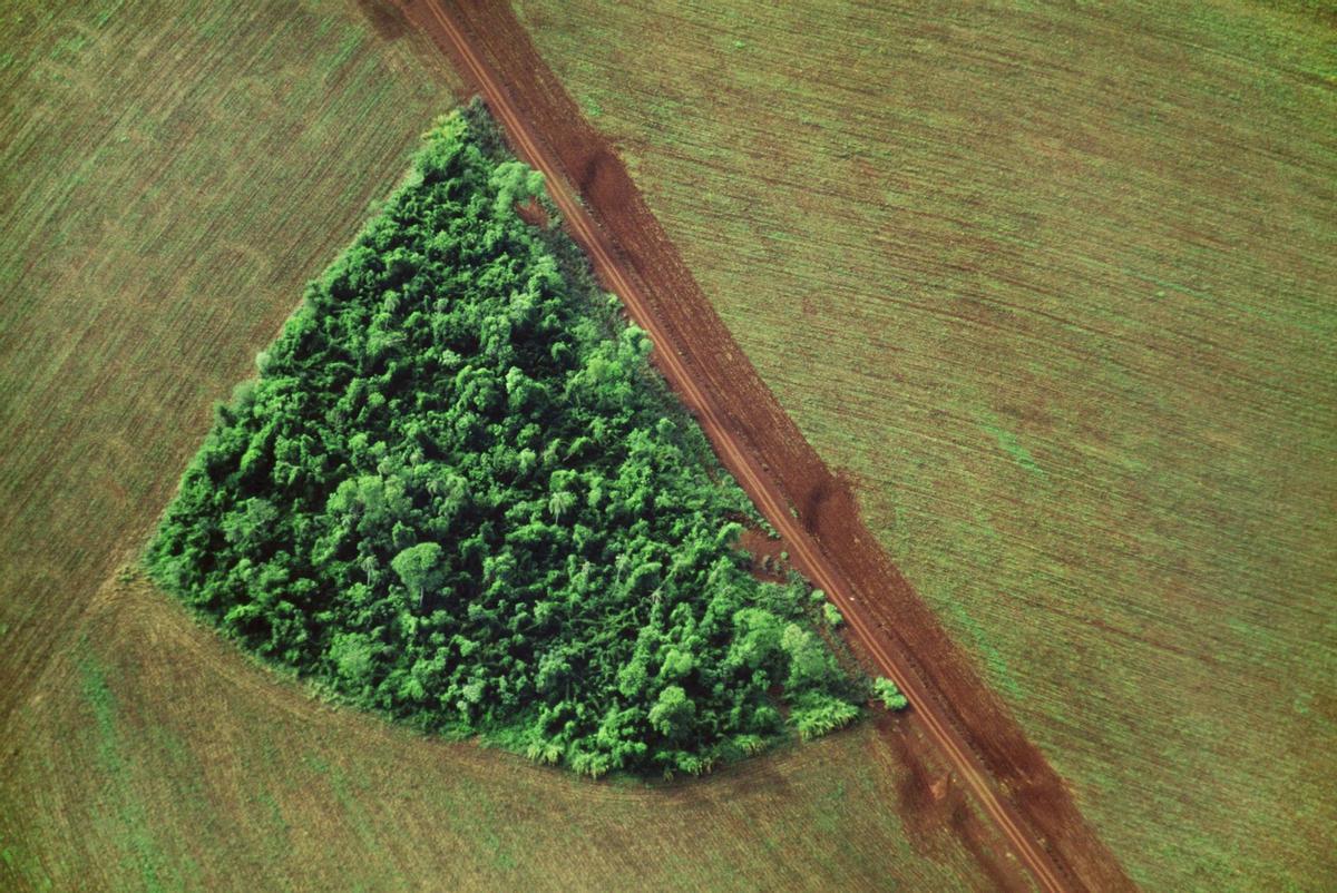 Brasil liderará a medio plazo la producción agrícola mundial, según un exministro