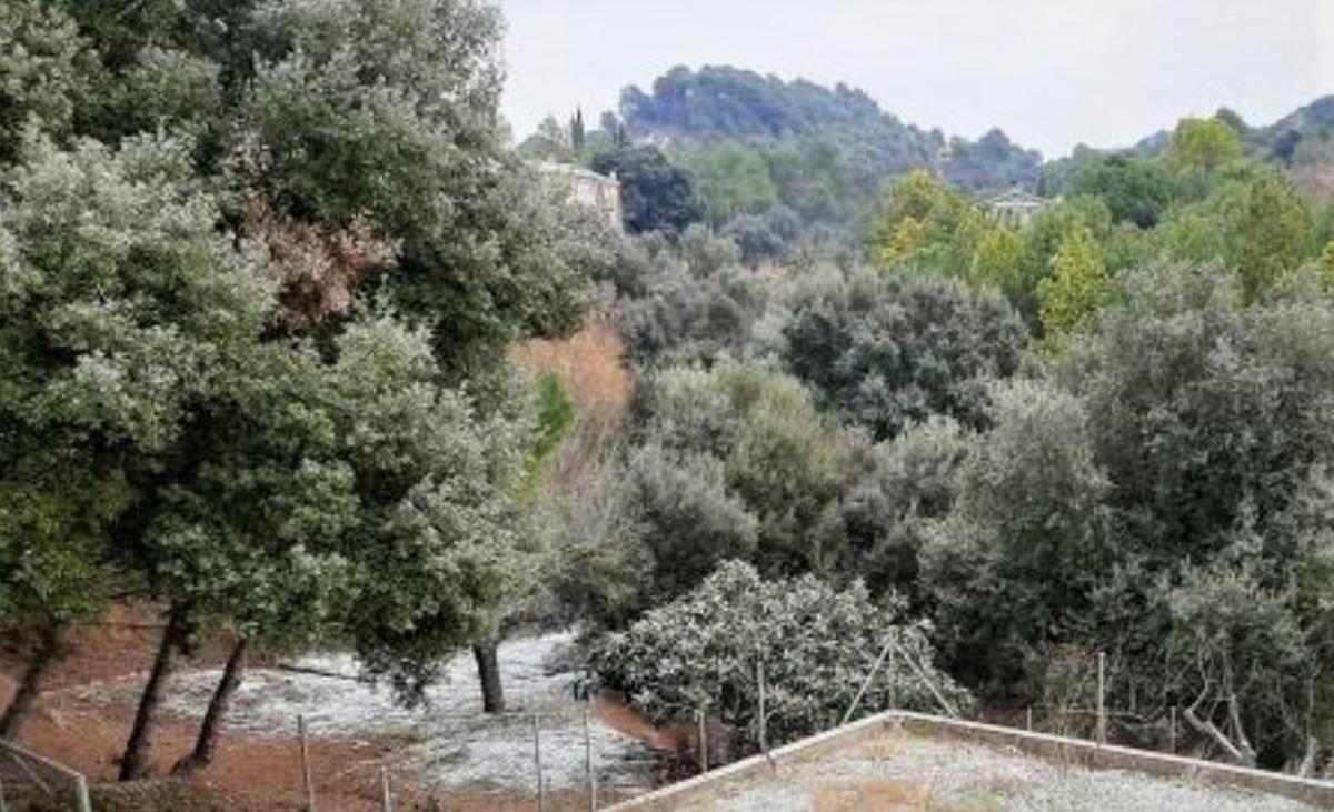 El municipio vallesano de Rellinars se levantó ligeramente nevado este jueves 7 de enero.