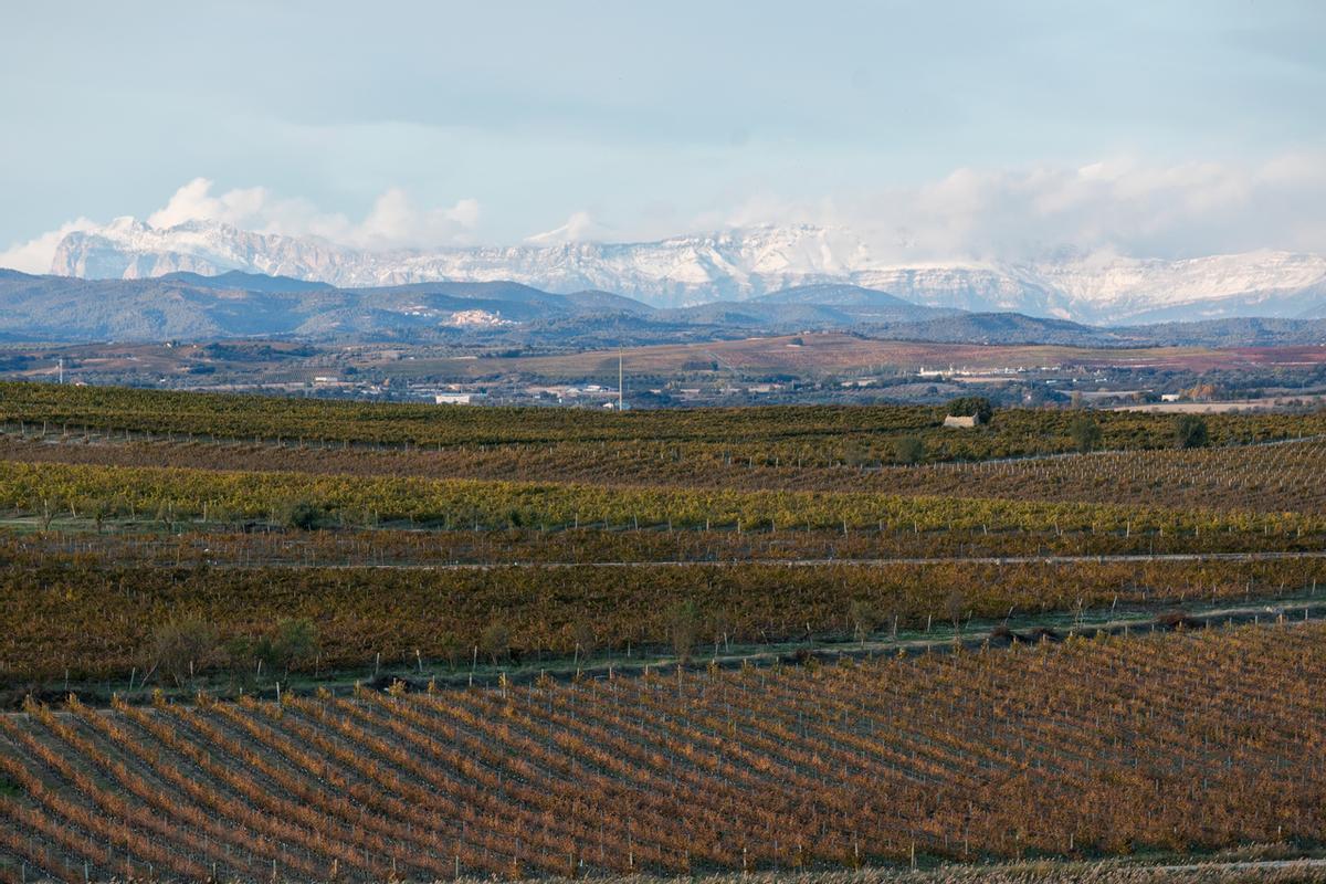 Campos de la bodega Laus en Alto Aragón.