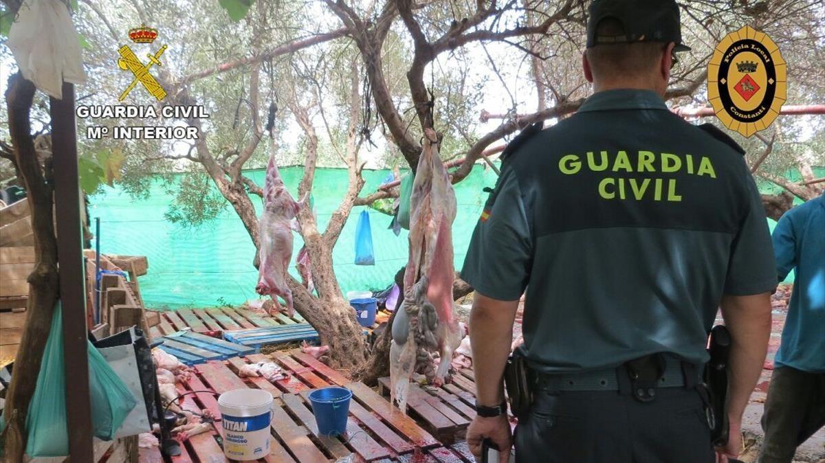 Agentes durante el desmantelamiento de un matadero ilegal en Constantí