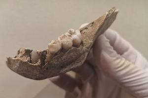 Detalle de una mandíbula infantil recuperada en el Roc de les Orenetes (Queralbs).