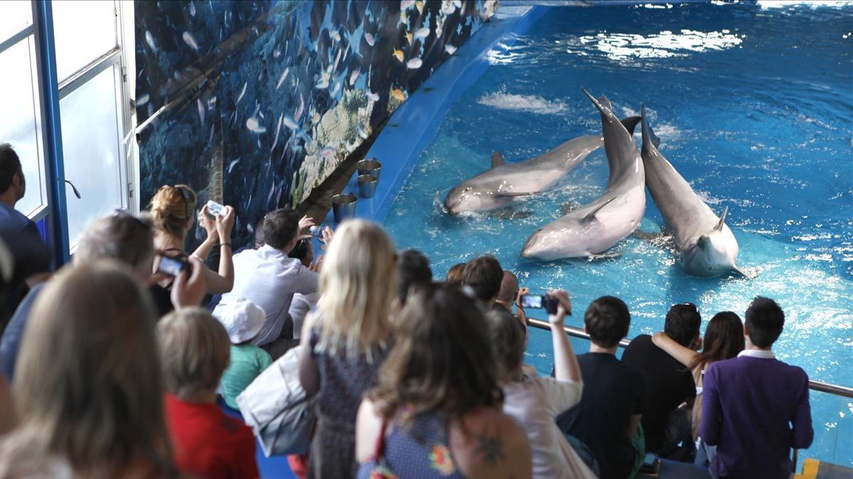 Pabellón de los delfines del Zoo de Barcelona, en 2012.