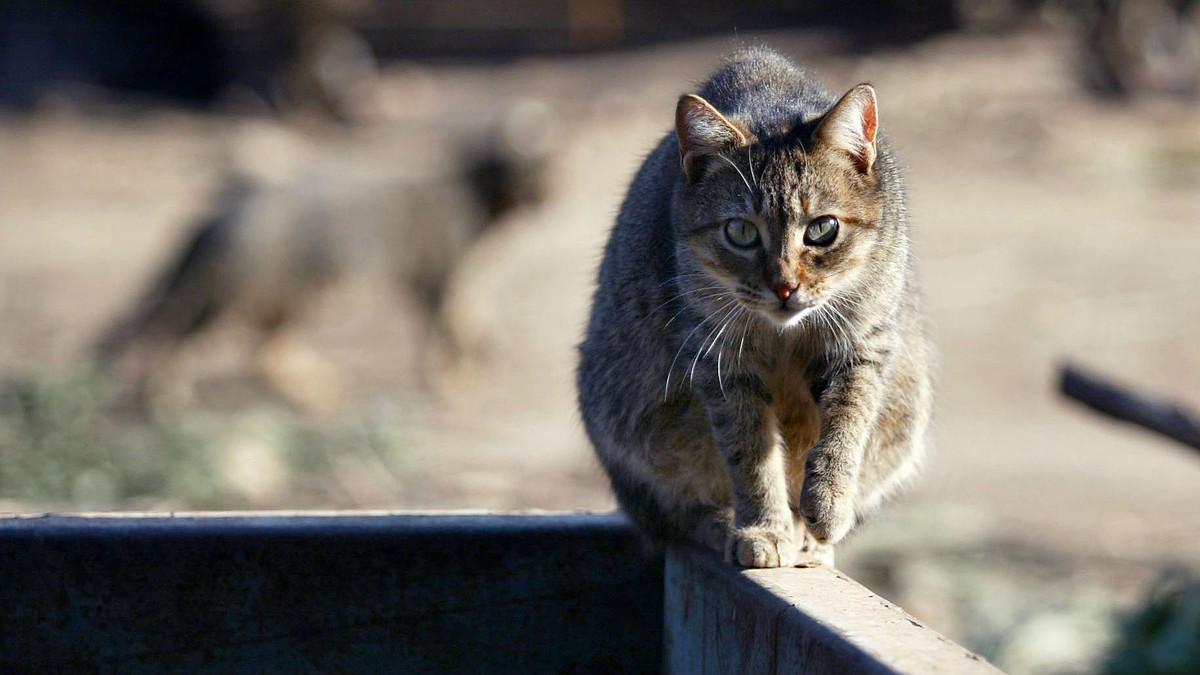Ejemplar de gato callejero, en los alrededores del Parc de la Ciutadella, en Barcelona.