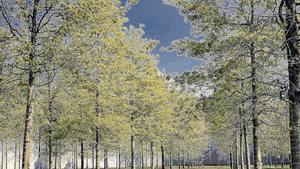 Apuesta por materias primas como el algodón orgánico, fibras forestales respetuosas con el entorno o tejidos reciclados.