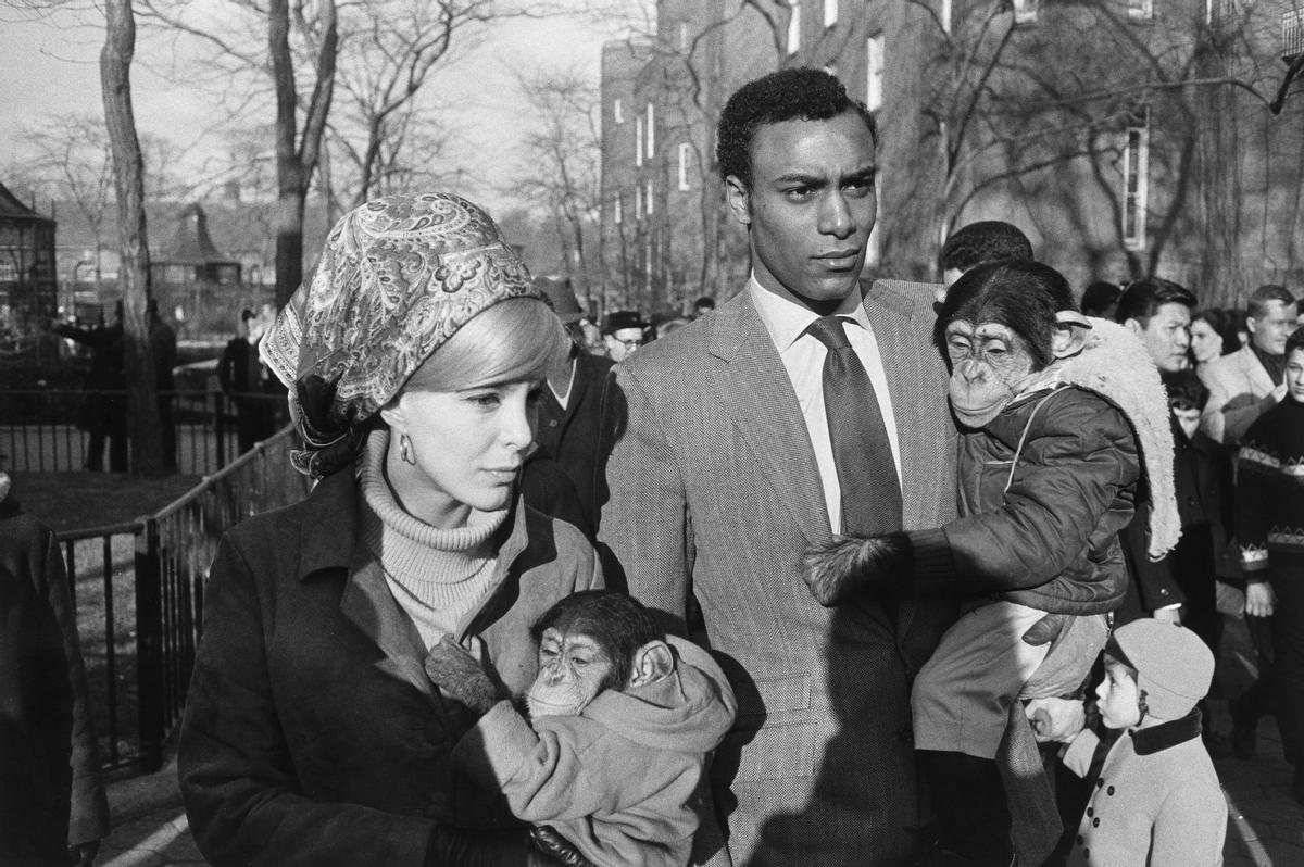 Zoo de Central Park, Nueva York, 1967.