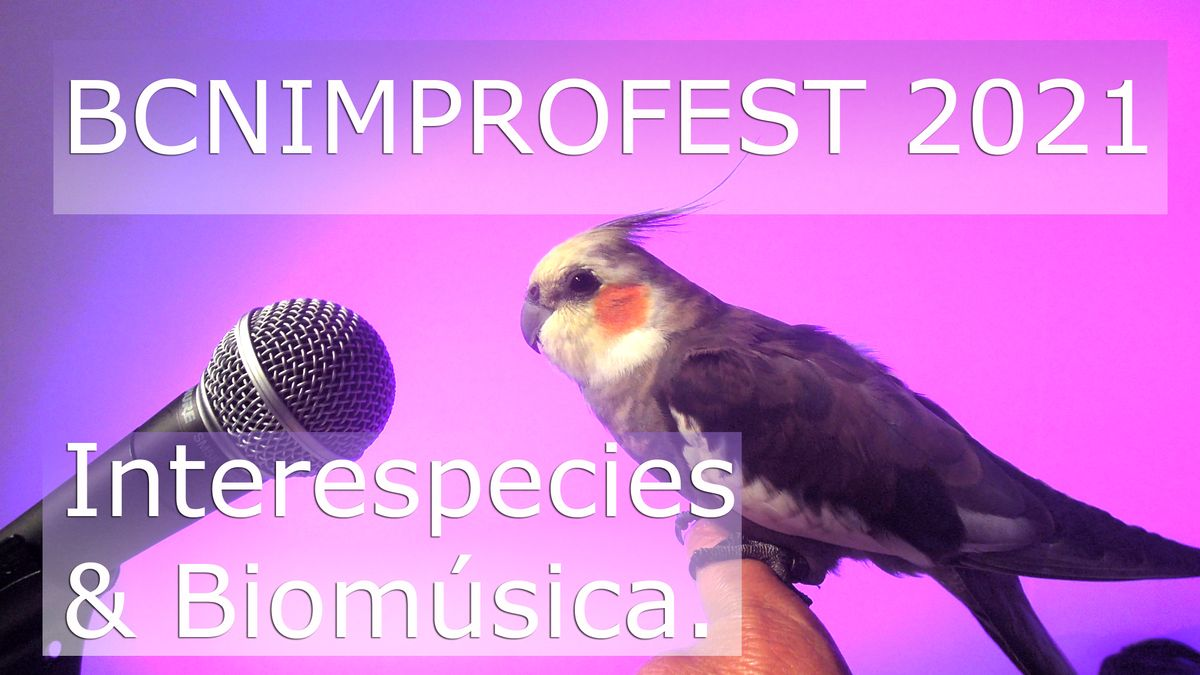 Cartel anunciador del festival con su estrella, la cacatúa Pipocarlitos.