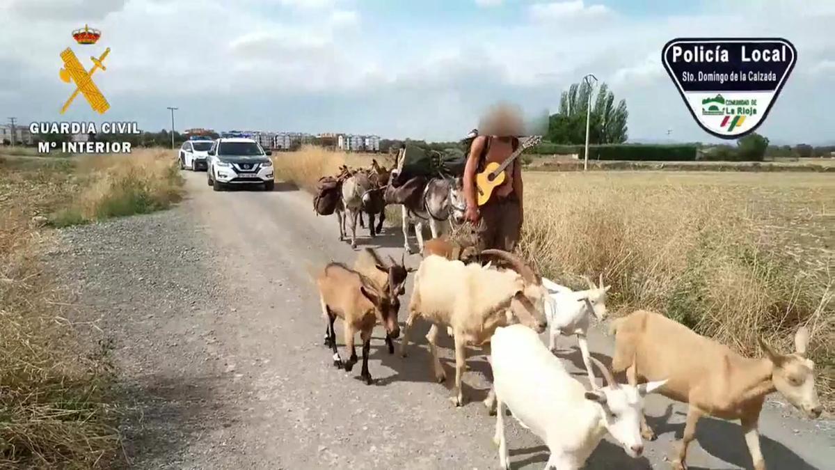Amb set cabres, tres burros i un gos: així feia el Camí de Santiago aquest pelegrí