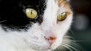 Condenada una joven en Ciudad Real por matar a un gato metiéndolo en la lavadora