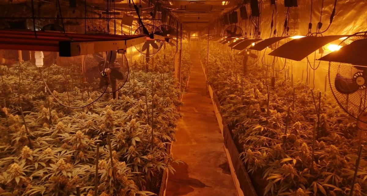 Desmantellen un clan a Badalona que feia fora veïns de casa seva per plantar marihuana