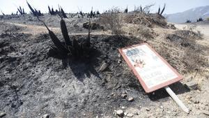 Parajes quemados en el que los medios aéreos y terrestres continúan este sábado luchando contra el incendio en Sierra Bermeja, que se declaró este pasado miércoles y sigue activo.