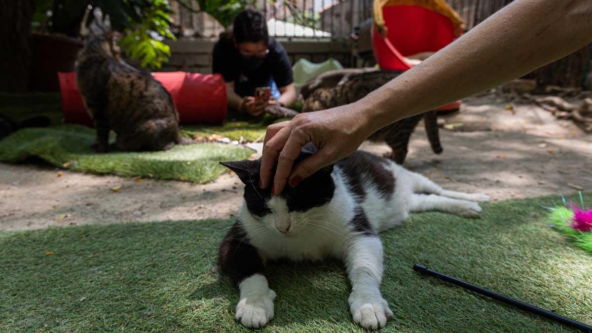 Uno de los gatos del Jardinet dels gats, en el Raval.