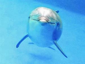 El delfinario del zoo.