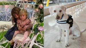 Junco, el perro de la Guardia Civil que busca el rastro de Anna y Olivia Gimeno en la isla de Tenerife.