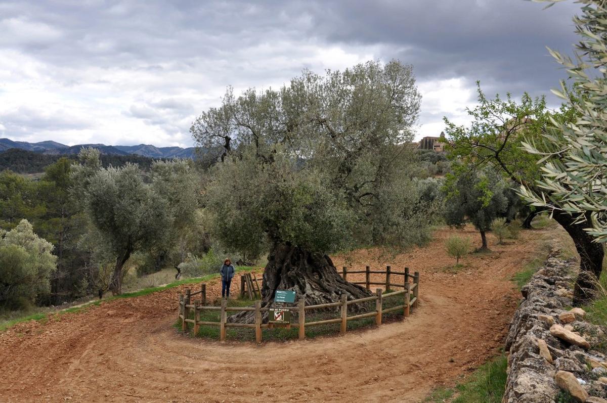 Viatge al suc de l'oliva