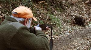 Un cazador apunta a un jabalí en una batida realizada enSant Hilari Sacalm.