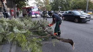 Un árbol caído en la avenida de Vallcarca a causa del fuerte viento que ha soplado este sábado en Barcelona.