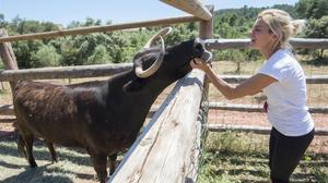 La vaca Margarita, a punt de salvar-se
