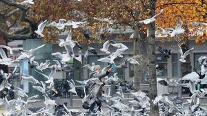 Una mujer echa pan a los pájaros en Zúrich.