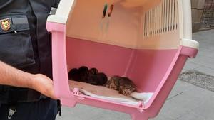Algunos de los 32 gatos intervenidos a una persona con síndrome de Noé en su casa de El Raval.